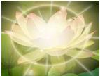 lotus with light