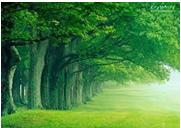 tree-arbor path